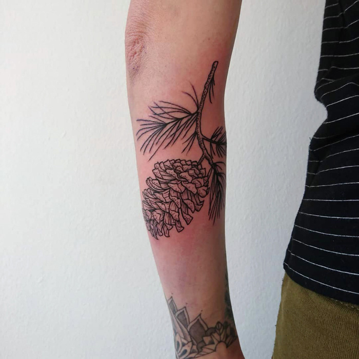 cone tattoo on branch with leaves, dotwork and linework, botanical tattoo